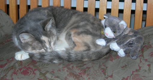 nappy cat