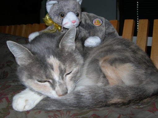 groggy cat